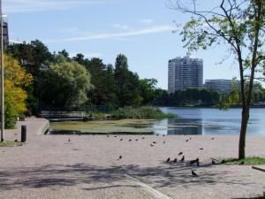 Algues lac BD