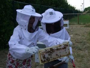 Détour au rucher