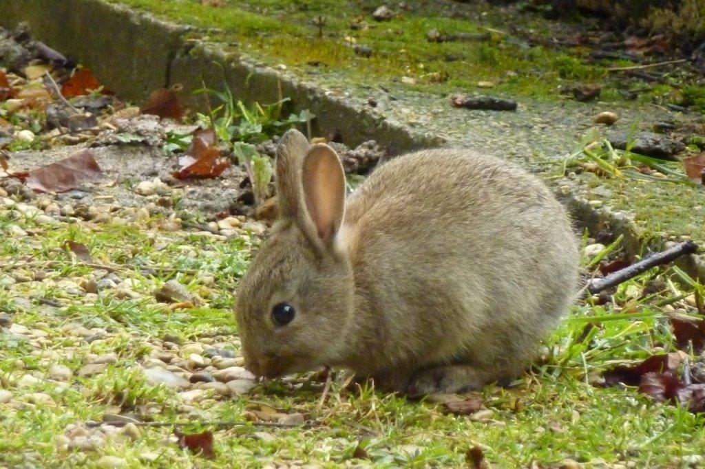 Sale temps pour les lapins !