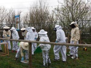 Initiation à l'apiculture @ Maison de la Nature - Ile de loisirs | Créteil | Île-de-France | France