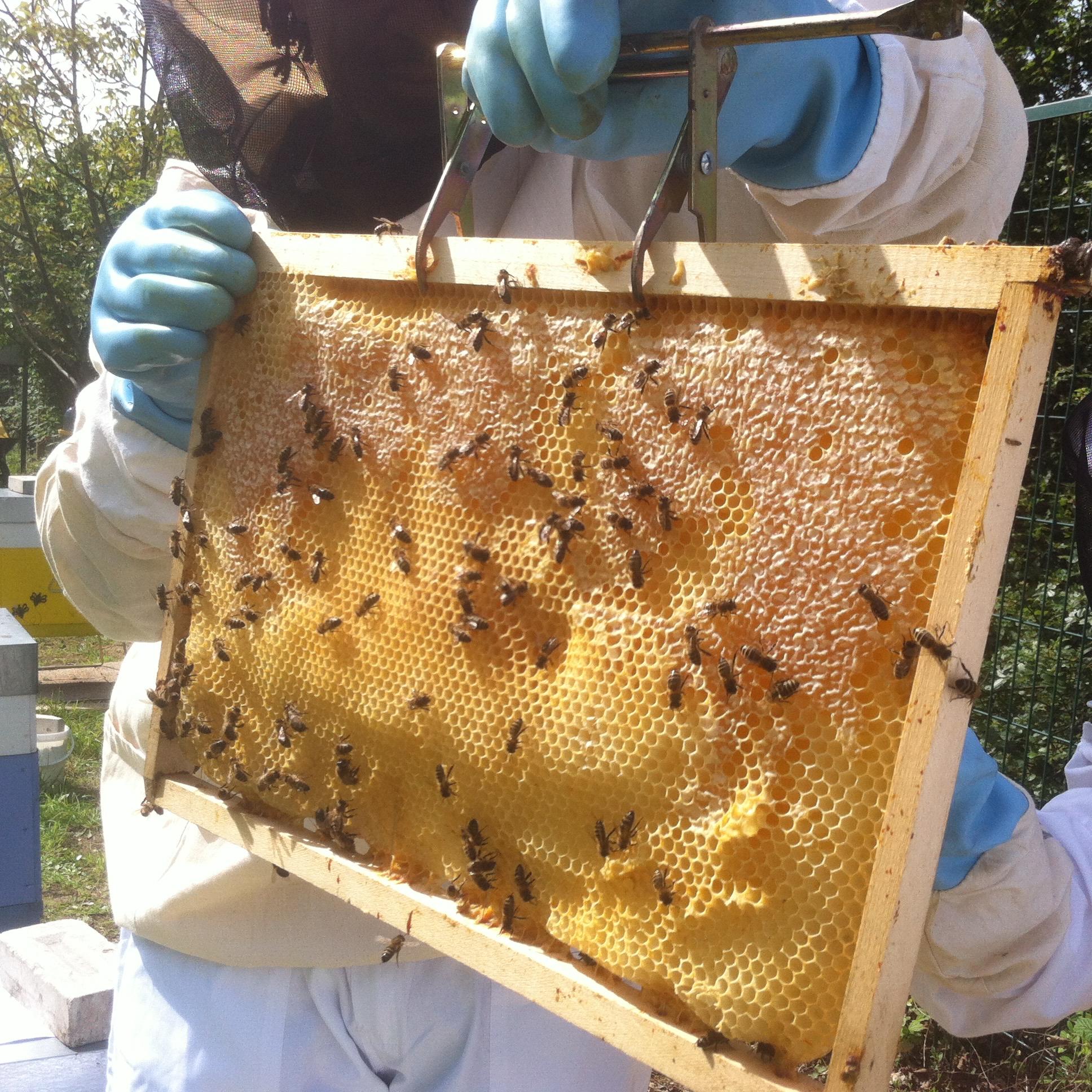 apiculteur synonyme