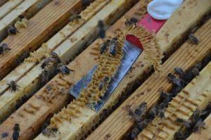 Initiation à l'apiculture @ Maison de la Nature - Ile de Loisirs de Créteil