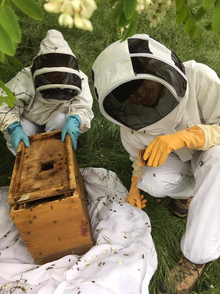 Essaimage abeilles 2